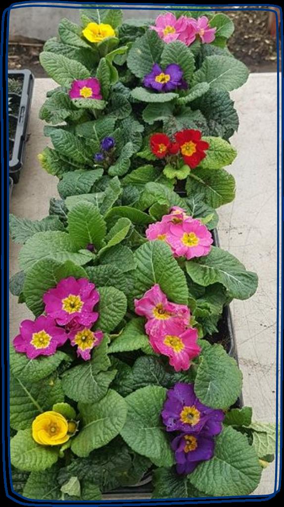 Kitchen Garden Flowers